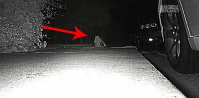 Neighbors Kept Getting Items Stolen Until They Caught The Weird Culprit: A Cat.