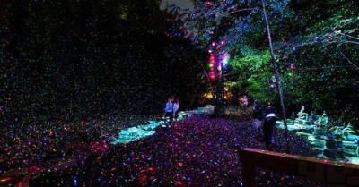 This Real Life Enchanted Forest in Quebec is Absolutely Breathtaking