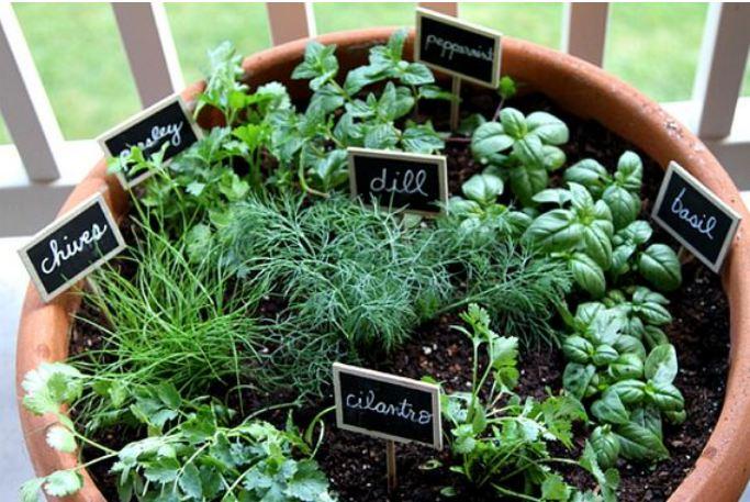 Amazing Indoor Herb Gardens