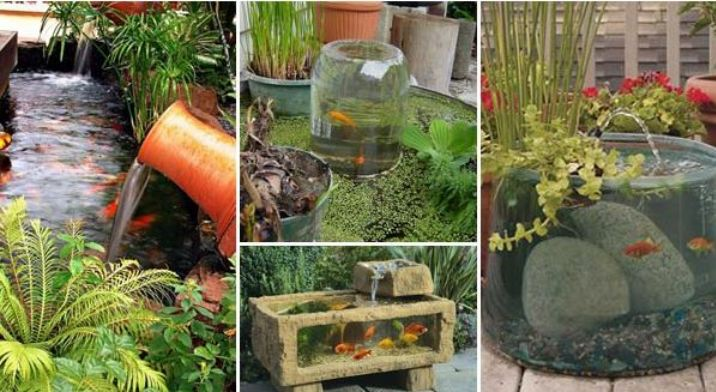 Cool Garden or Backyard Aquarium Ideas Will Blow Your Mind