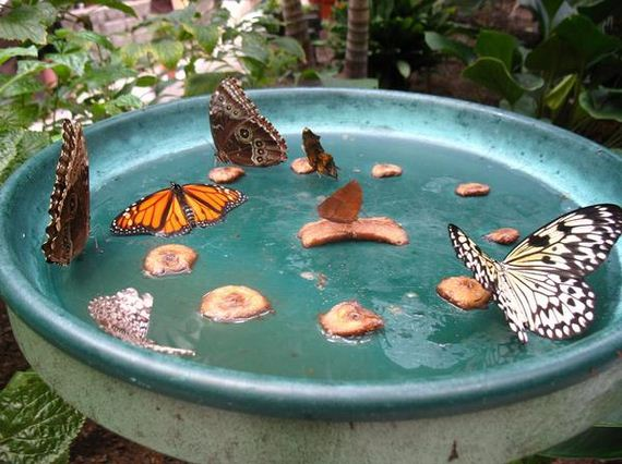 Awesome Different Garden Projects