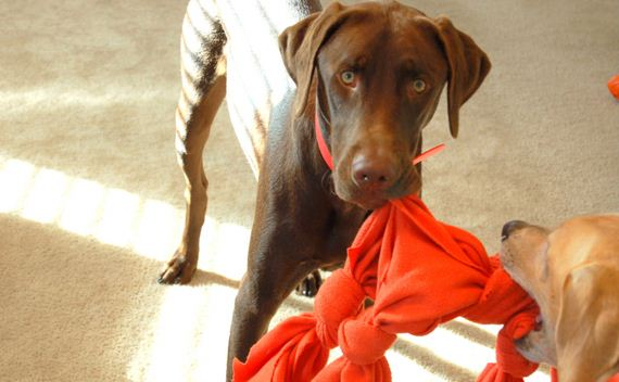 Awesome Dog Toys You Can Make From Things Around the House
