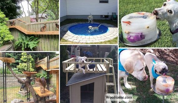 DIY Backyard Projects and Tips for Your Pets