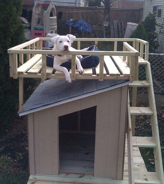 05-Projects-and-Tips-for-Pets-WooHome