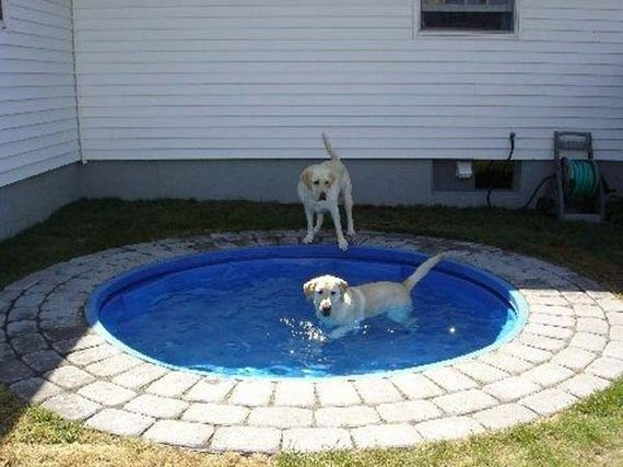07-Projects-and-Tips-for-Pets-WooHome