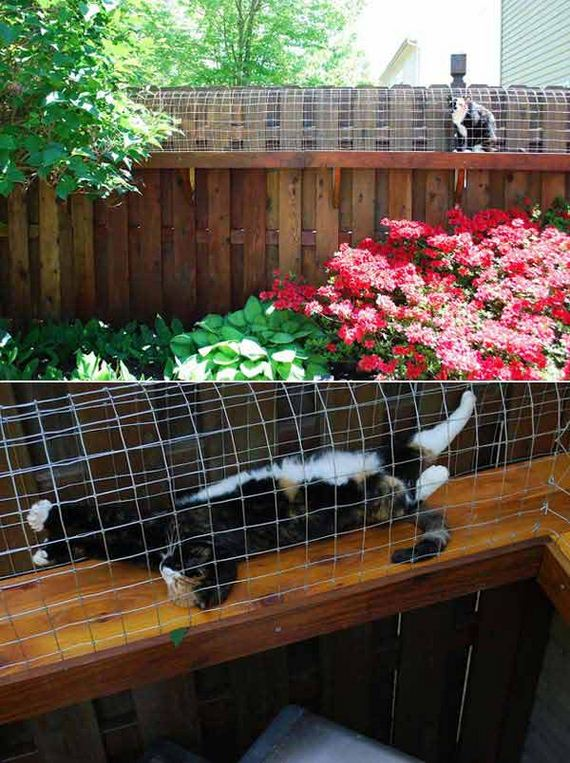 08-Projects-and-Tips-for-Pets-WooHome
