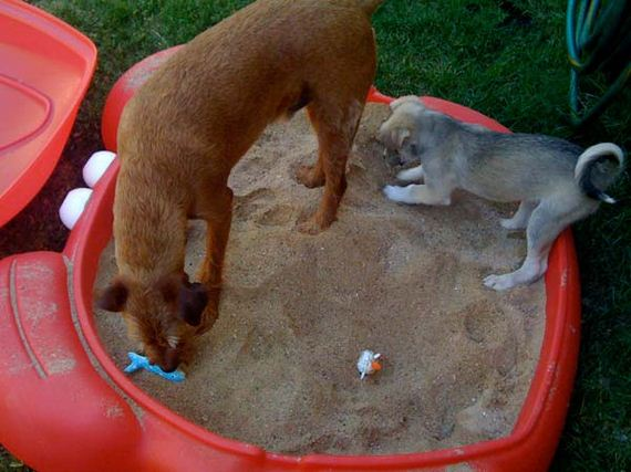 16-Projects-and-Tips-for-Pets-WooHome