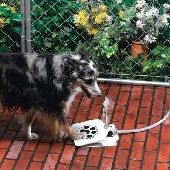 19-Projects-and-Tips-for-Pets-WooHome
