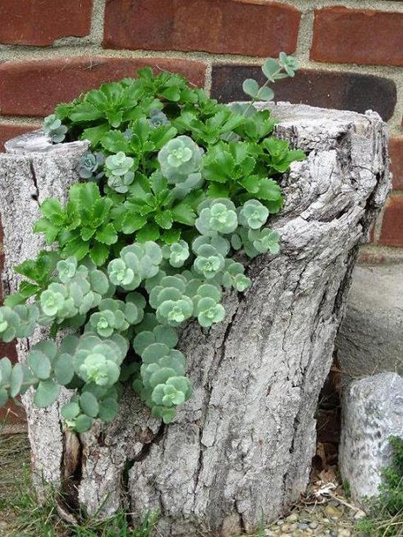 How to recycle tree stumps for garden art and yard decorations for Tree trunk uses