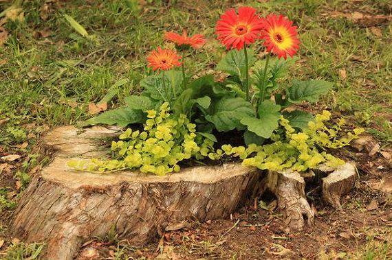 33-DIY-Tree-Stump-Garden