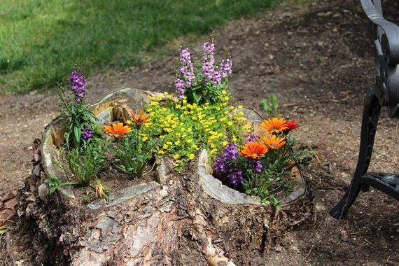 34-DIY-Tree-Stump-Garden