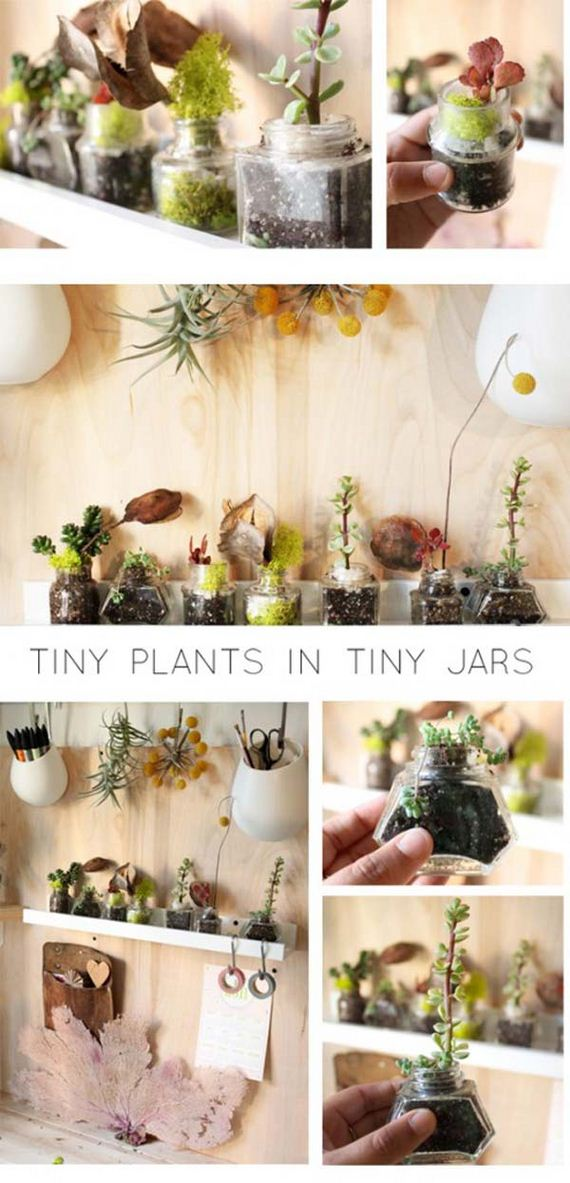 23-indoor-garden-projects
