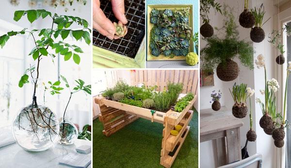 Amazing Ideas to Display Your Indoor Mini Garden