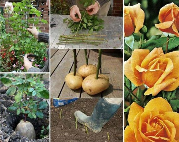 03-Gardening-Tricks