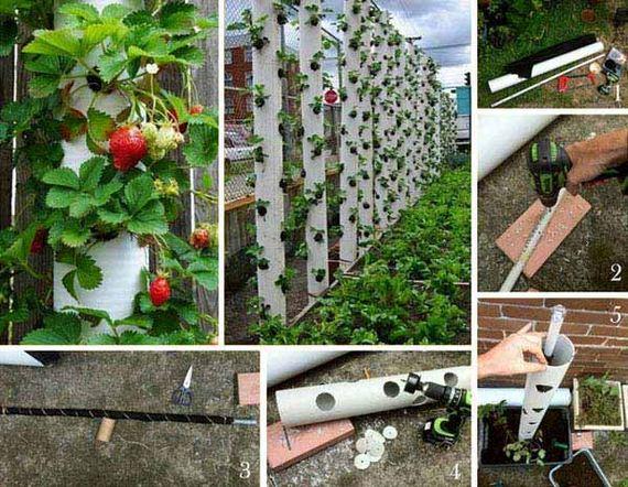 07-Gardening-Tricks