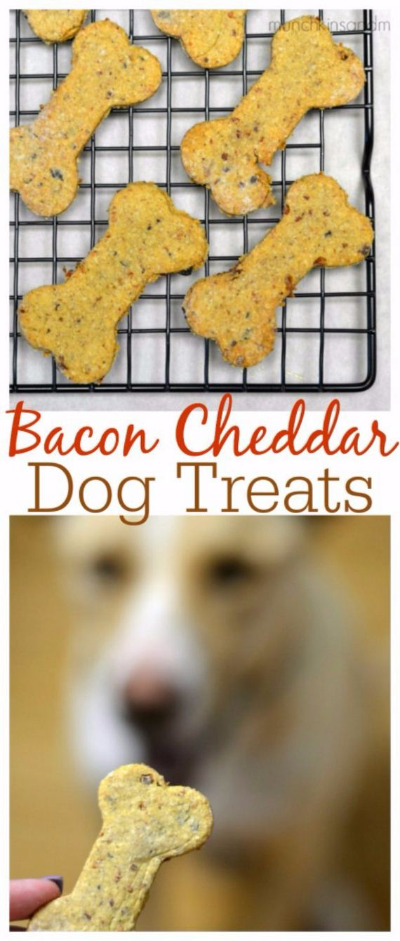 12-Homemade-Pet-Recipes