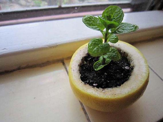 20-Gardening-Tricks