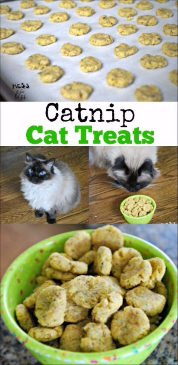 21-Homemade-Pet-Recipes
