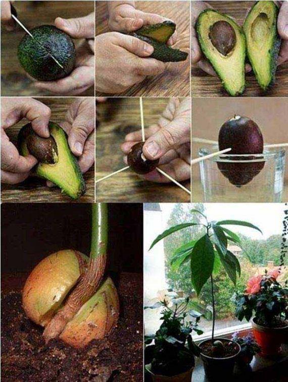 24-Gardening-Tricks