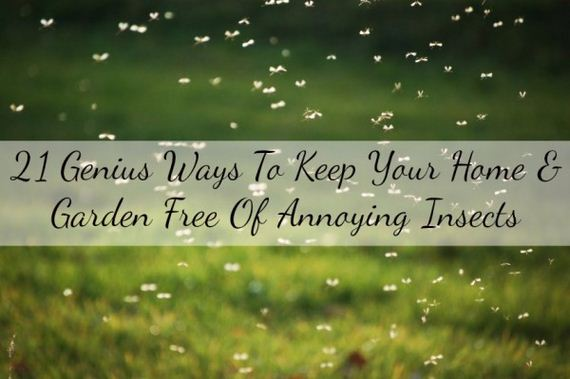 Keep Your Home & Garden Free Of Annoying Insects