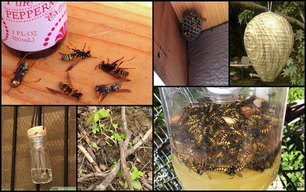 How To Have A Wasp Free Summer
