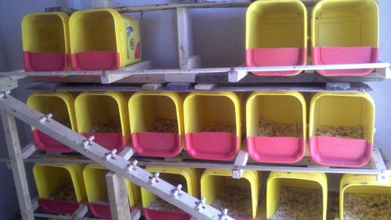 11-Kitty-Litter-Containers