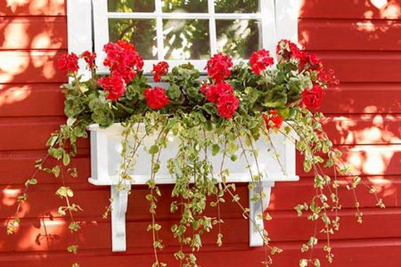 Unique Window Boxes