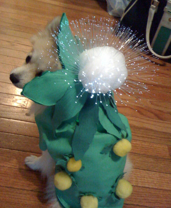 20 cool and adorable diy pet costume ideas for halloween your dog will look immensely cute wearing this creative do it yourself costume thats not only going to save you a few dollars this halloween but is also solutioingenieria Choice Image