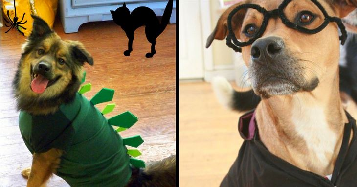 20+ Cool and Adorable DIY Pet Costume Ideas for Halloween