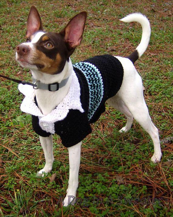 Cute And Warm Pet Crochet Patterns