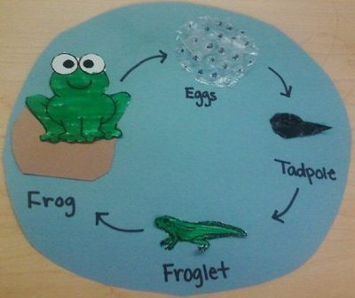 Amazing Life Cycle Projects for Kids