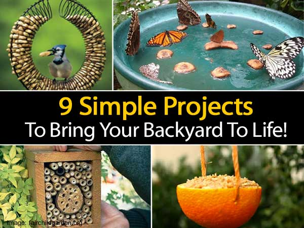 Amazing Projects To Bring Your Backyard To Life