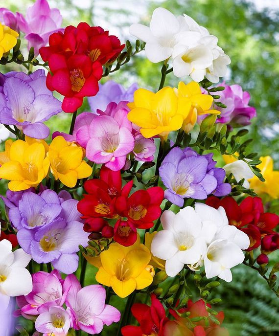 Most Fragrant Flowers In The World