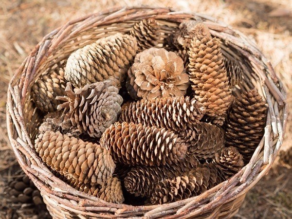 Coll Stuff To Make With Pine Cones