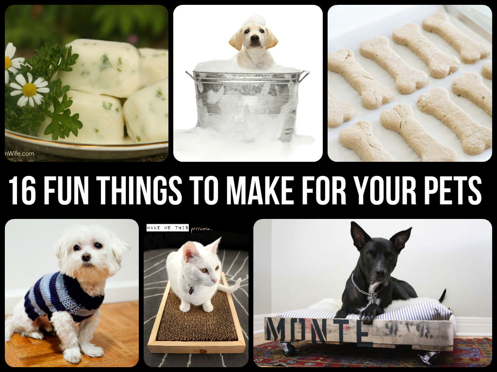 Cool And Fun Things To Make For Your Pets