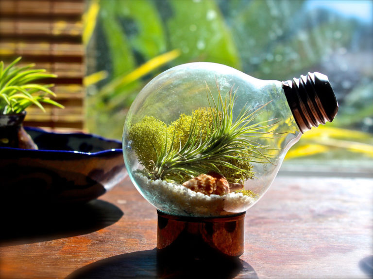Amazing Diy Miniature Terrariums Made From Upcycled Things