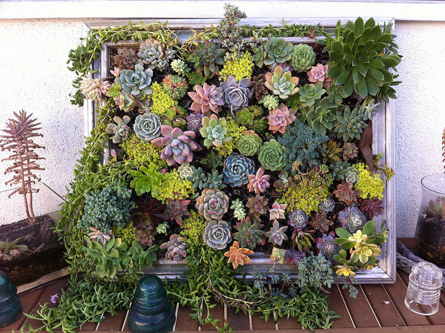 Cool DIY Vertical Gardens