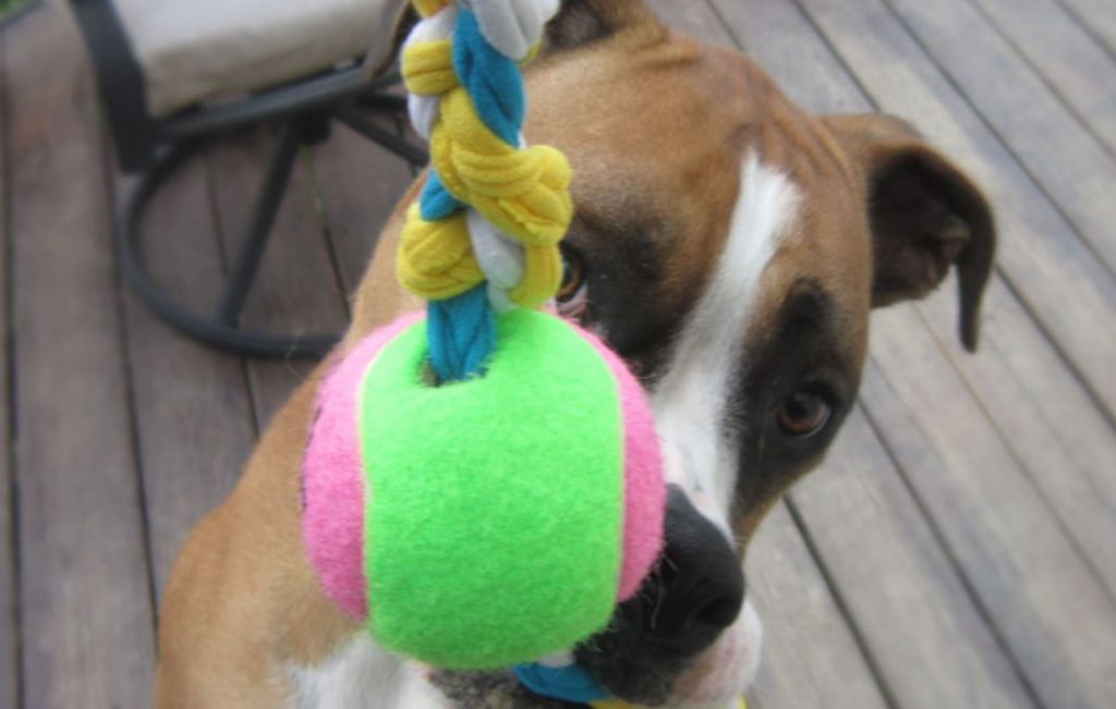 7 Awesome DIY Dog Toys