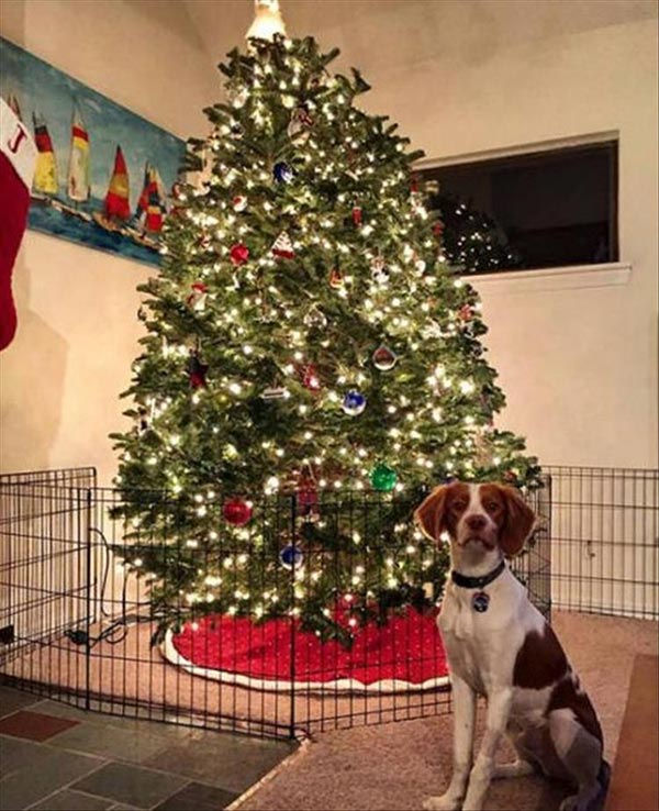 15+ Amazing Ideas to Protect Your Christmas Tree From Your Pets